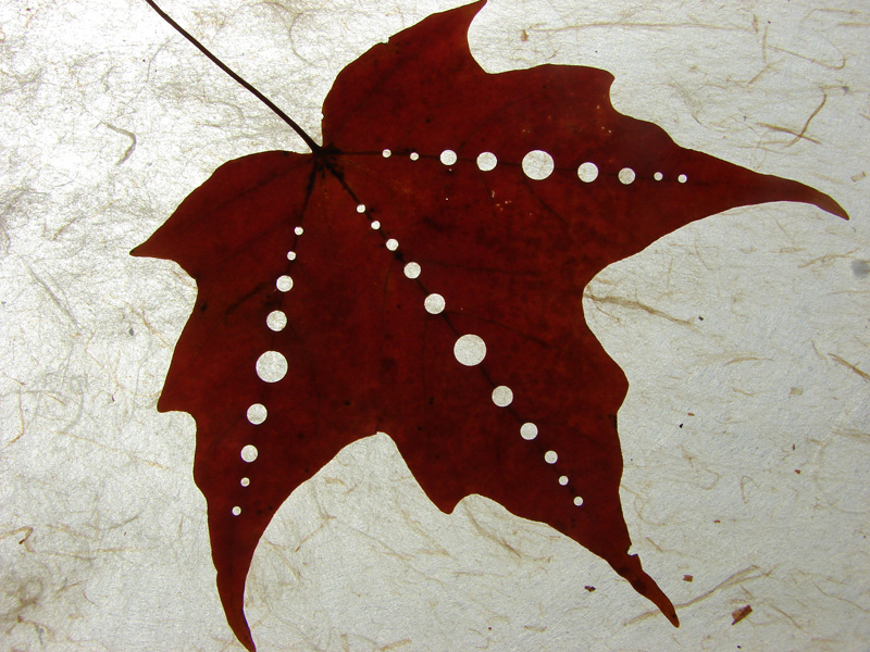Maple leaf dotted